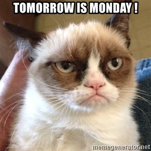 Grumpy Cat 2 - Tomorrow is Monday !
