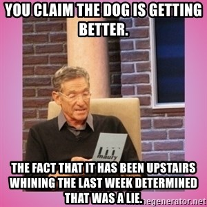 MAURY PV - You claim the dog is getting better.  The fact that it has been upstairs whining the last week determined that was a lie.