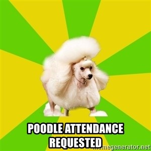 Pretentious Theatre Kid Poodle -  poodle attendance requested