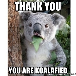 surprised koala - Thank you  You are Koalafied
