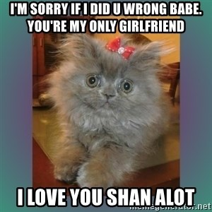 cute cat - I'm sorry if I did u wrong babe. you're my only girlfriend I love you Shan alot