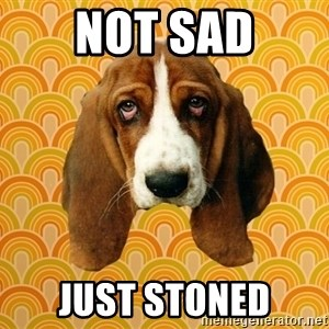 SAD DOG - Not sad Just stoned