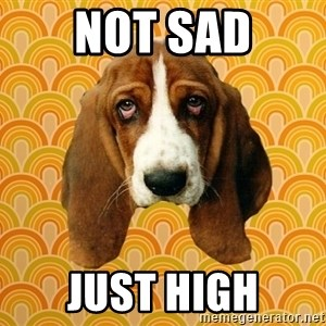 SAD DOG - Not sad Just high