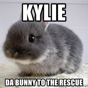 ADHD Bunny - kylie  da bunny to the rescue