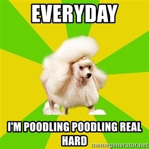 Pretentious Theatre Kid Poodle - Everyday  I'm poodling poodling REAL HARD