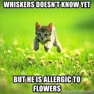 God Kills A Kitten - Whiskers doesn't know yet But he is allergic to flowers