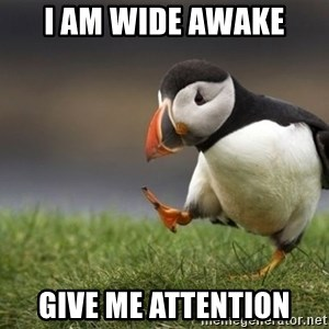 Unpopular Opinion Puffin - I am wide awake Give me attention