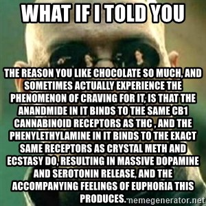 what if i told you matri - What if I told you the reason you like chocolate so much, and sometimes actually experience the phenomenon of craving for it, is that the anandmide in it binds to the same CB1 cannabinoid receptors as THC , and the phenylethylamine in it binds to the exact same receptors as Crystal Meth and Ecstasy do, resulting in massive dopamine and serotonin release, and the accompanying feelings of euphoria this produces.