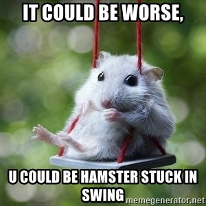 Sorry I'm not Sorry - it could be worse, u could be hamster stuck in swing