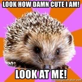 Homeschooled Hedgehog - LOOK HOW DAMN CUTE I AM! LOOK AT ME!