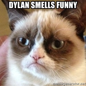 Angry Cat Meme - Dylan smells funny