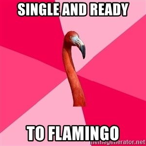 Fanfic Flamingo - Single and Ready To Flamingo