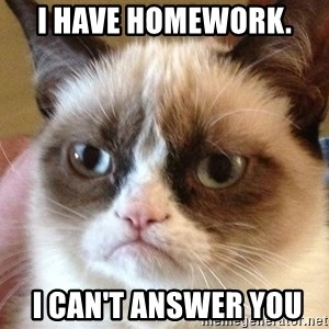 Angry Cat Meme - I have homework.   I can't answer you