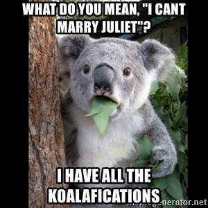 """Koala can't believe it - What do you mean, """"I cant marry Juliet""""? I have all the koalafications"""