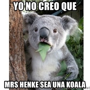 surprised koala - Yo no creo que Mrs Henke sea una koala