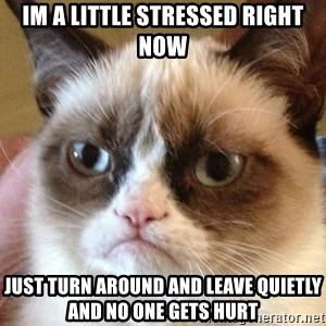 Angry Cat Meme - im a little stressed right now just turn around and leave quietly and no one gets hurt
