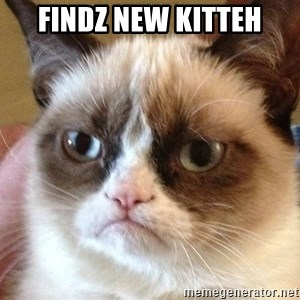 Angry Cat Meme - findz new kitteh