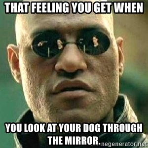 What if I told you / Matrix Morpheus - That feeling you get when you look at your dog through the mirror.