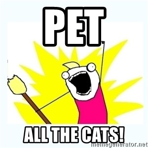 All the things - pet all the cats!