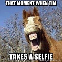 Horse - that moment when tim takes a selfie