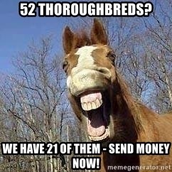Horse - 52 Thoroughbreds? We have 21 of them - Send money now!