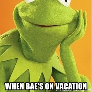 Kermit the frog -  when bae's on vacation