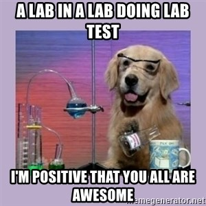 Dog Scientist - A lab in a lab doing lab test i'm positive that you all are awesome