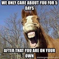 Horse - we only care about you for 5 days after that you are on your own
