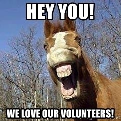 Horse - Hey You! We love our volunteers!
