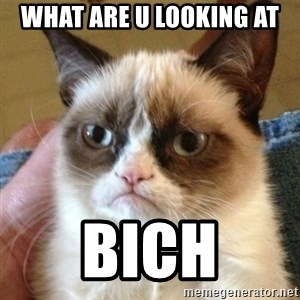 not funny cat - what are u looking at BICH
