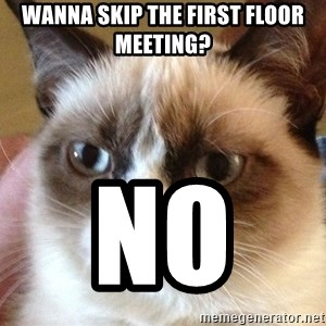 Angry Cat Meme - WANNA SKIP THE FIRST FLOOR MEETING? NO