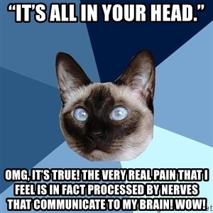 """Chronic Illness Cat - """"it's all in your head."""" omg, it's true! the very real pain that i feel is in fact processed by nerves that communicate to my brain! wow!"""