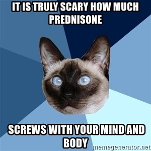Chronic Illness Cat - It is truly scary how much prednisone  screws with your mind and body
