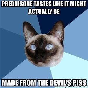 Chronic Illness Cat - Prednisone tastes like it might actually be made from the devil's piss