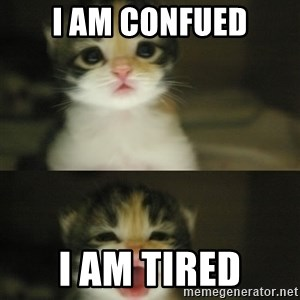 Adorable Kitten - i am confued I am tired
