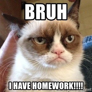 Mr angry cat - BRUH I HAVE HOMEWORK!!!!