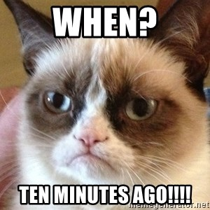 Angry Cat Meme - WHEN? TEN MINUTES AGO!!!!