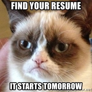 Angry Cat Meme - find your resume it starts tomorrow