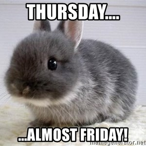 ADHD Bunny - Thursday.... ...almost Friday!