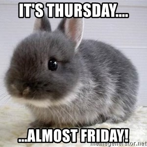 ADHD Bunny - It's Thursday.... ...almost FRiday!