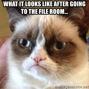 Angry Cat Meme - What it looks like after going to the file room...