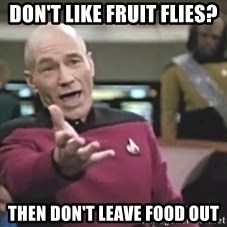 Captain Picard - Don't like fruit flies? Then don't leave food out
