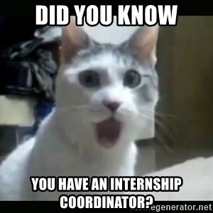 Surprised Cat - Did you know You have an internship coordinator?
