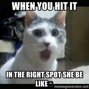 Surprised Cat - When you hit it In the right spot she be like😲