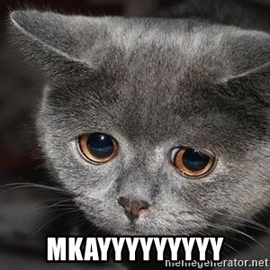 sad cat -  mkayyyyyyyyy