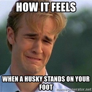 Crying Man - How it feels When a husky stands on your foot