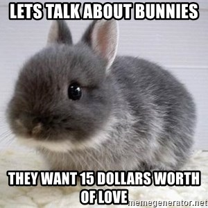 ADHD Bunny - Lets talk about bunnies They want 15 dollars worth of love