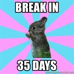 yAy FoR LifE BunNy - Break in  35 days