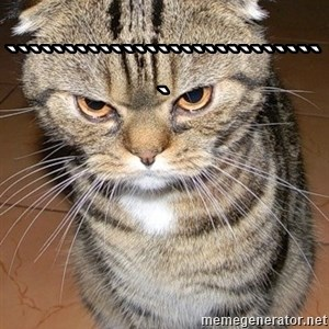 angry cat 2 -  ````````````````````````````