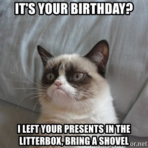 Grumpy cat good - it's your birthday? I left your presents in the litterbox, bring a shovel